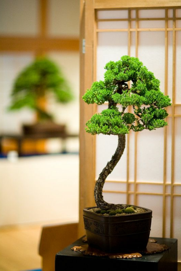 mini bonsai tree plant beautiful deco ideas