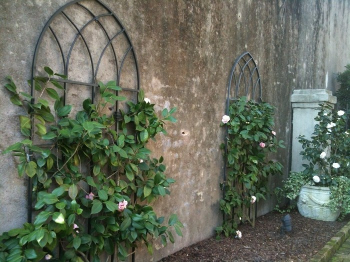 Trellis in the garden climbing roses decorate the walls