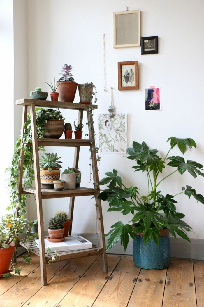 easy-care indoor plants pictures wooden staircase shelf