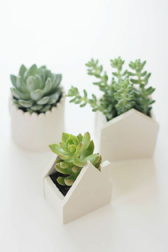 feng shui plants asian style home ideas easy care indoor plants