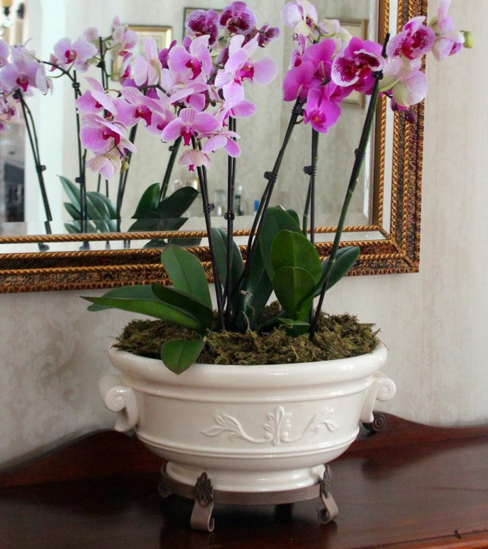 Orchids cultivate indoor plants beautiful deco ideas