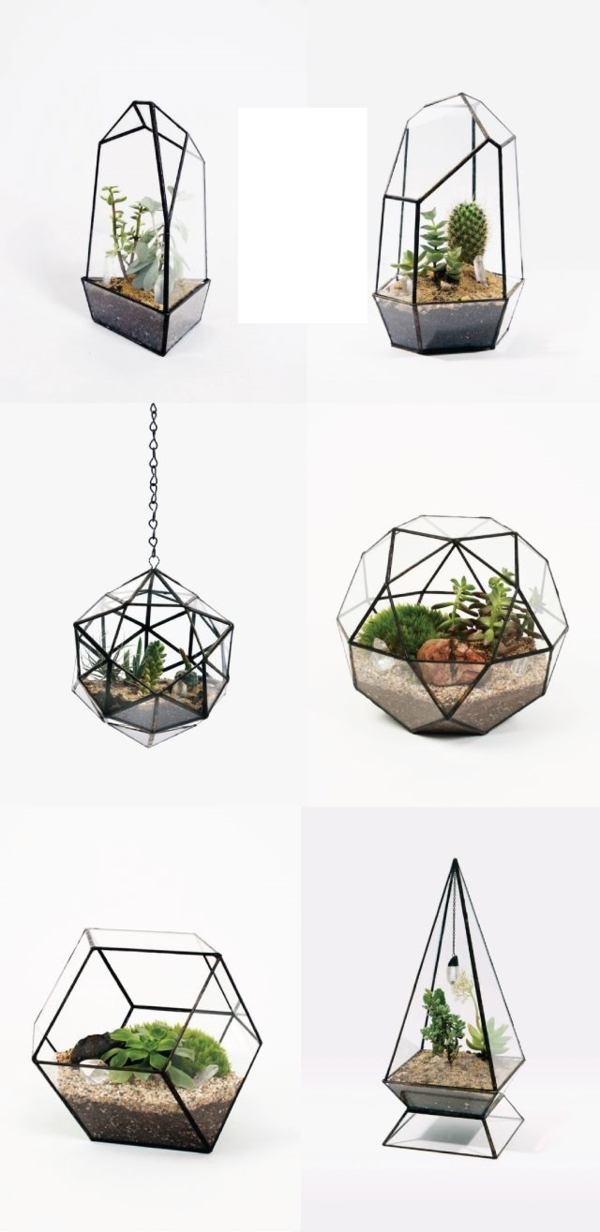 terrarium plants glass vessels irregular terrarium build yourself
