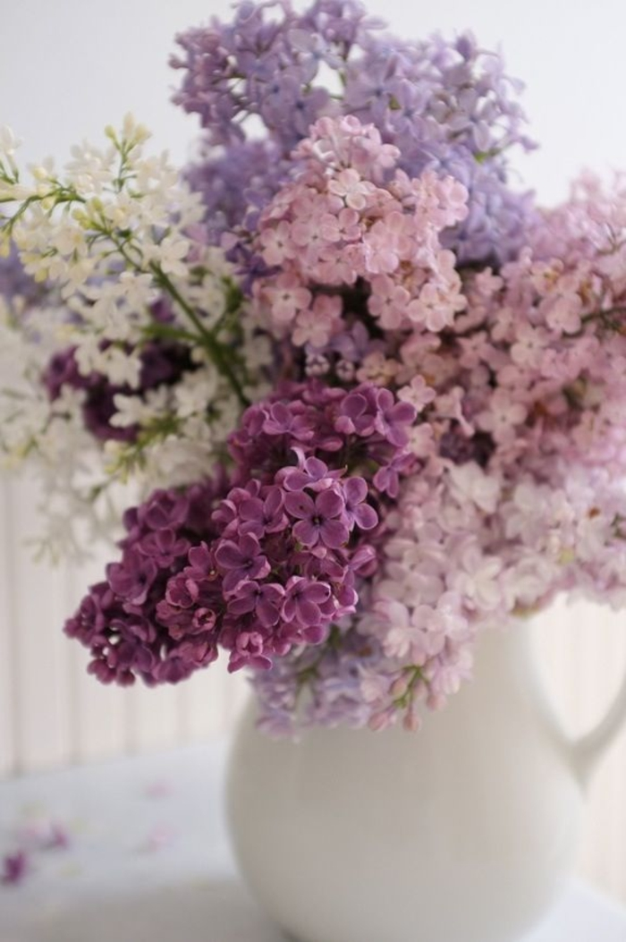decorating lilacs lilacs multiply