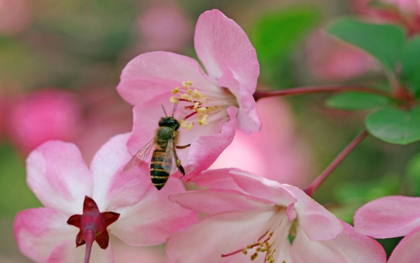 begonia care pink bee garden plant