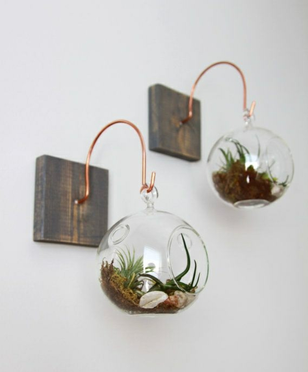 terrarium plants glass jars round hanging wall decoration ideas
