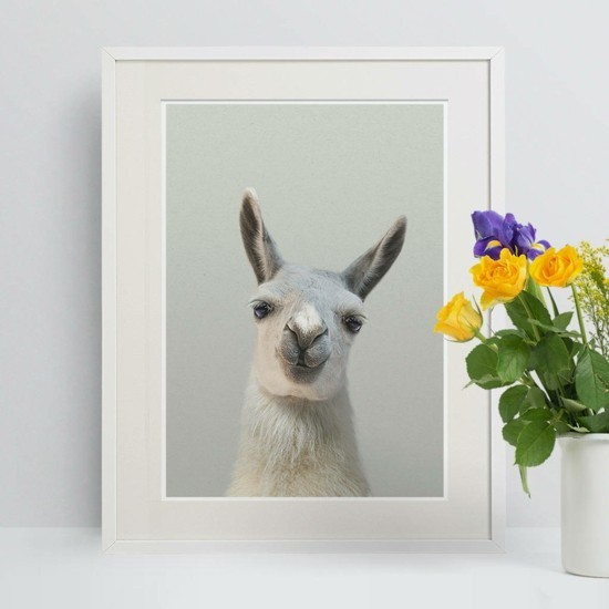 birthday decoration birthday motto south american lama in picture frame