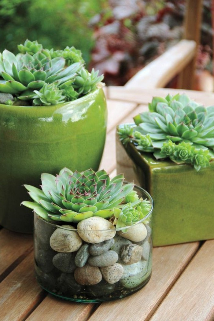 succulent decoration glass