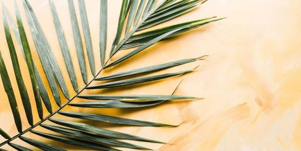 Palm Sunday celebrate palm branches today decorative tasks
