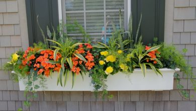Photo of Potted plants for a beautiful garden – choose container appropriately