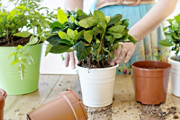 Planter pots in several colors