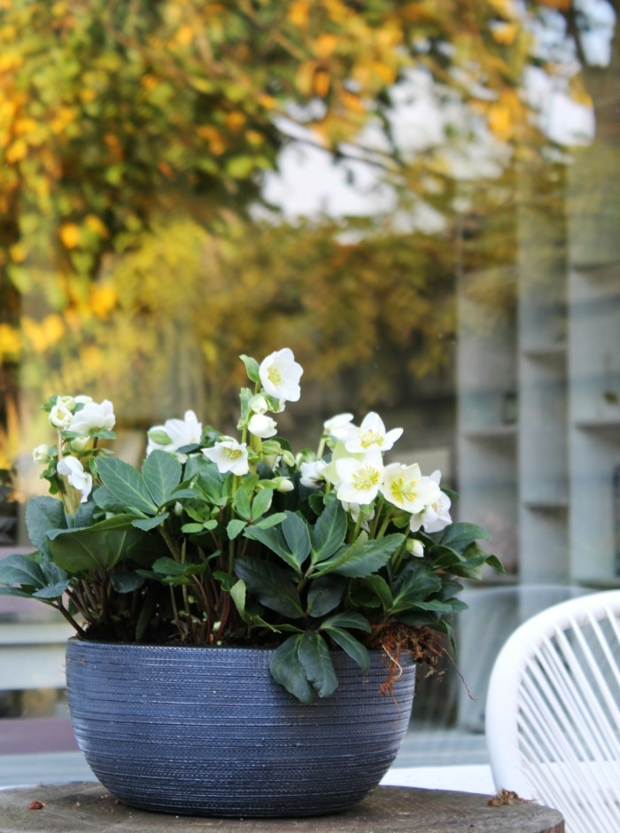 garden plants potted plants care