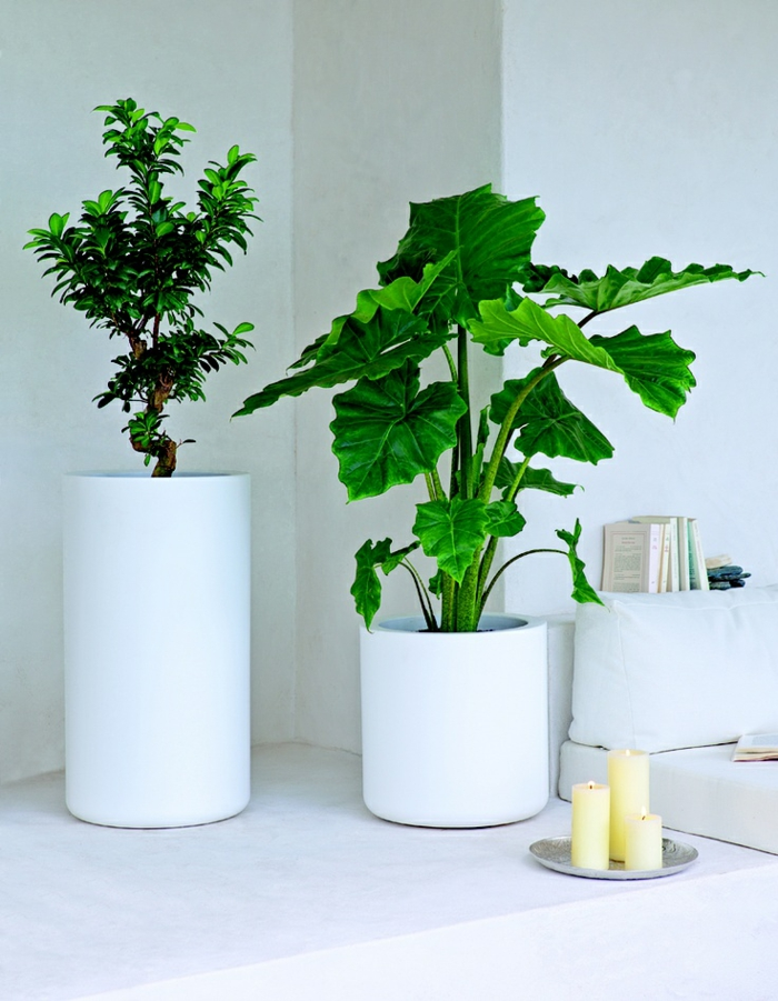 feng shui indoor plants easy care living ideas positive energy room palms
