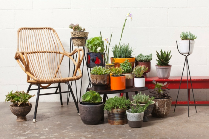easy-care indoor plants decorate pictures with potted plants