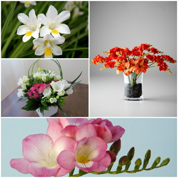 freesia floral table decoration table decoration flowers