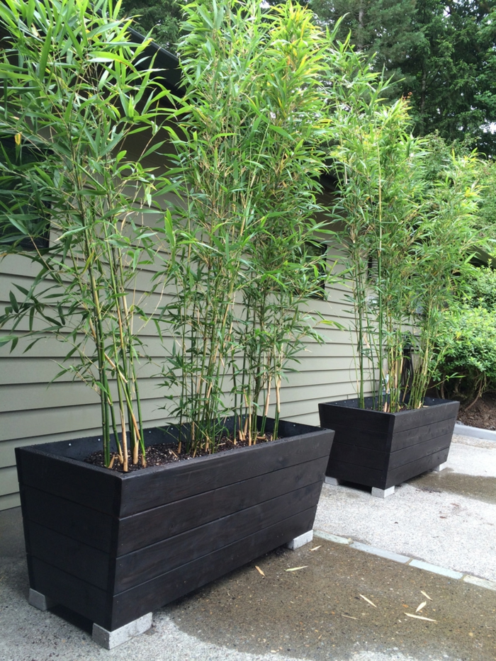 bamboo plant bamboo decoration garden decoration