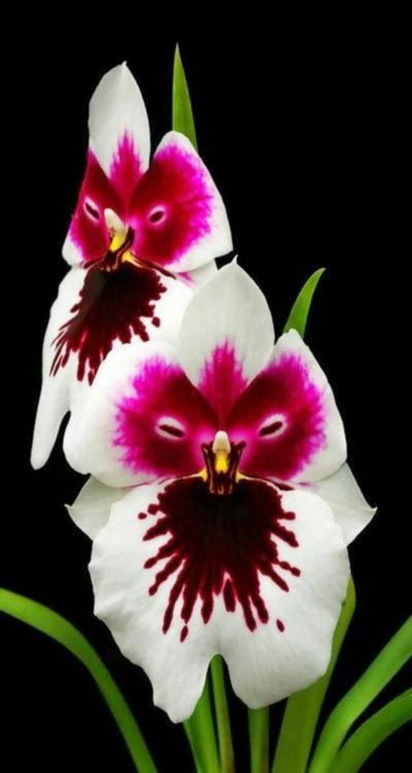 orchids beautiful decorations white pinks