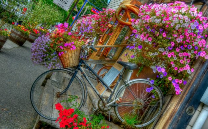 Creative gardening ideas for little gardens. Bicycle. Colorful
