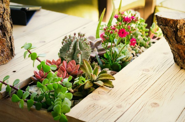 great-cactus-diy-planter