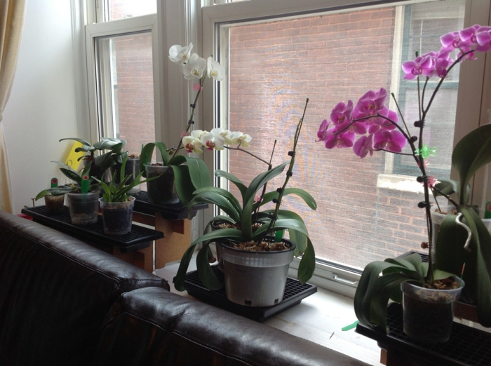 orchid care different types of indoor plants