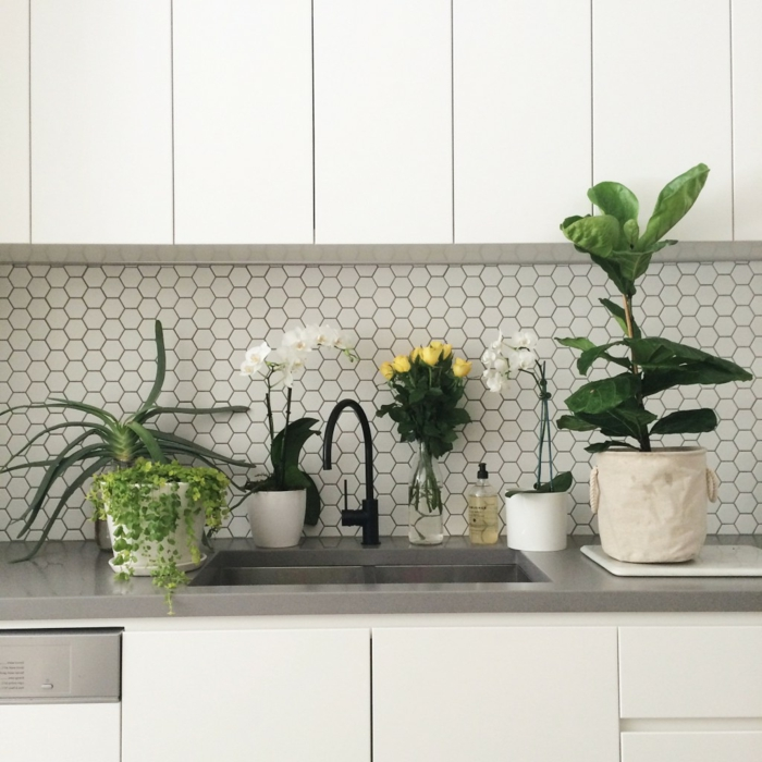 indoor plants kitchen deco ideas kitchen back wall living ideas