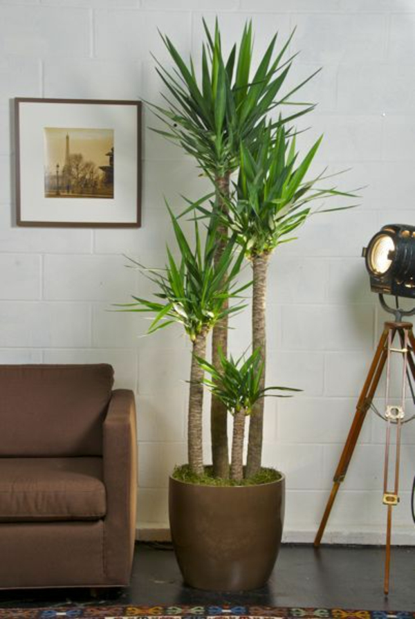 decorate living room with palm trees
