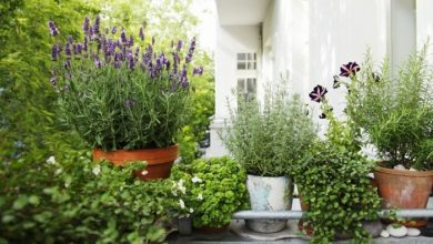 Photo of Plant a balcony and look forward to a magnificent garden