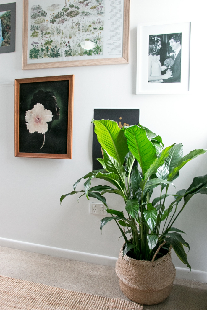 indoor plants potted plants decorate wall