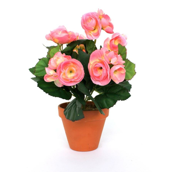 begonia care pink flowers flower pot