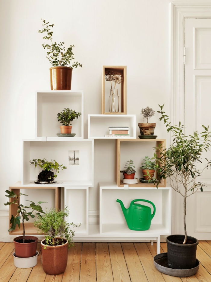 beautiful indoor plants easy-care potted wall decoration shelf