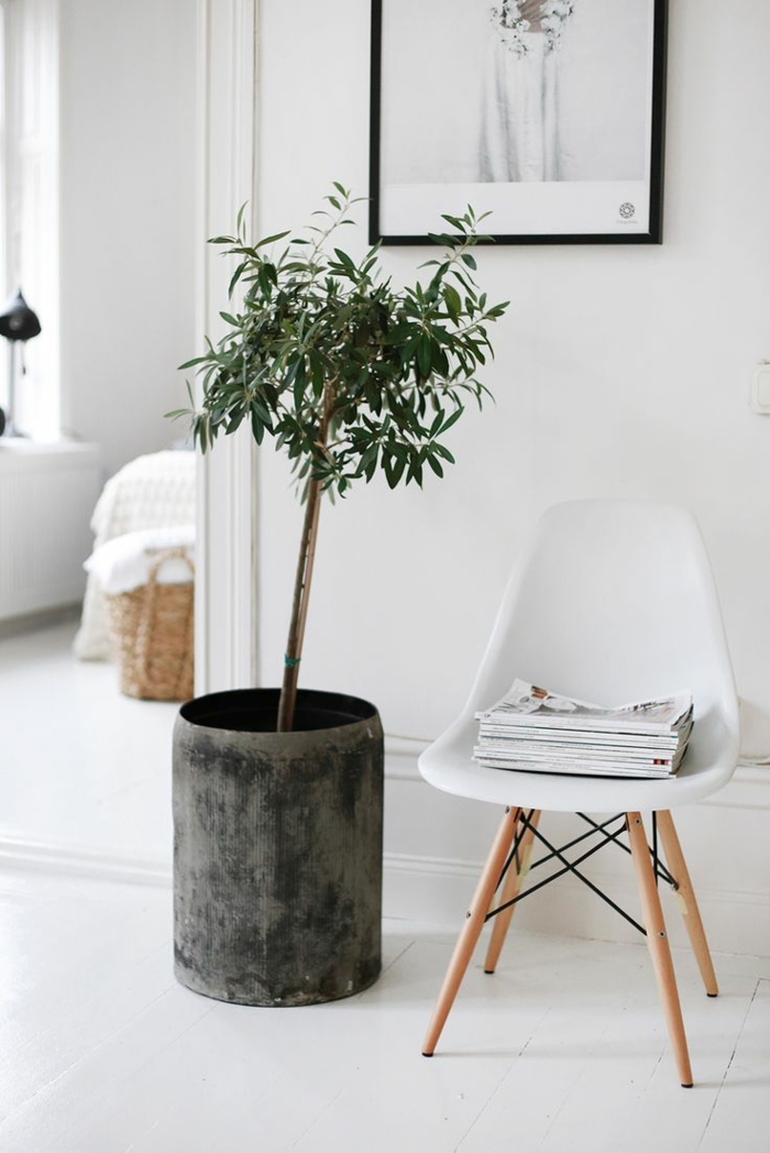 beautiful houseplants easy to care for and set up Scandinavian indoor trees
