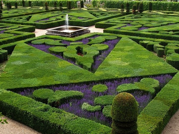 French garden with evergreen plants