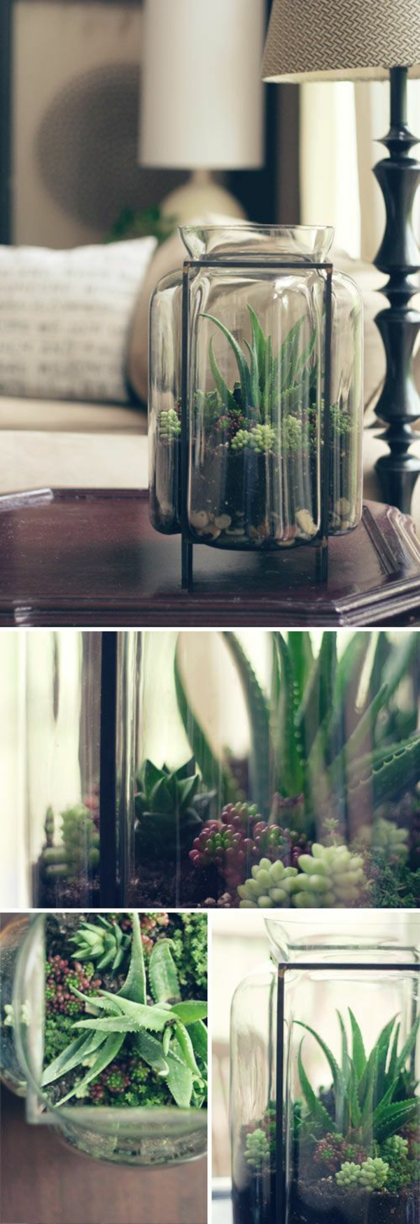matching terrarium plants glass vessel moss deco products