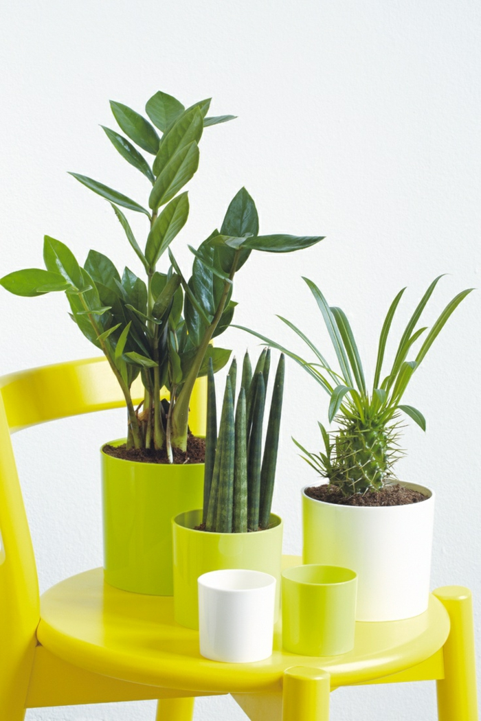 feng shui elements easy care room plants dining ideas