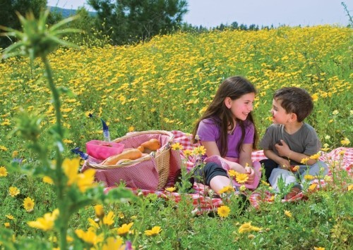 in the middle of a yellow-green meadow picnic ideas