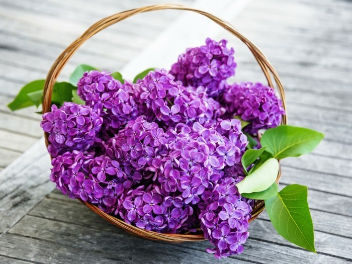 beautiful table decoration made of lilac