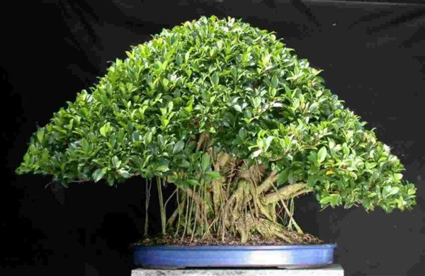indoor plants easy care pictures potted plants fikus