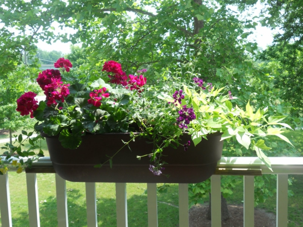 flower box balcony plant white railing
