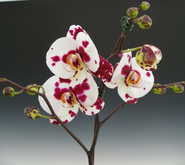 orchid species white red flowers beautiful deco ideas