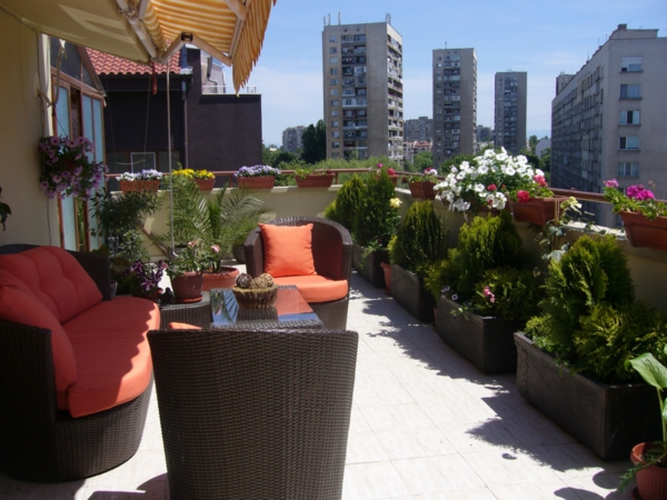 terrace design examples plants sun protection
