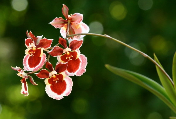 potted plants oncidium orchid beautiful indoor plants