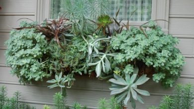 Photo of Cool decoration ideas with succulents for outdoor use