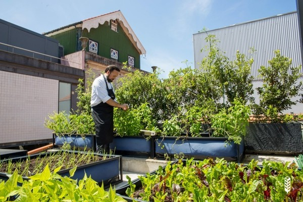 transform the roof terrace into a garden