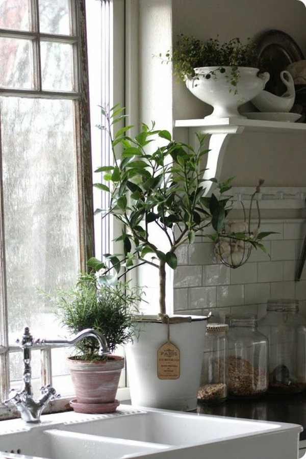 little tree in the kitchen