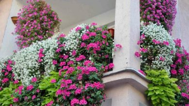 Photo of Hanging balcony plants: suitable species for a green balcony